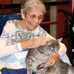 A visiting cat and resident get to know each other