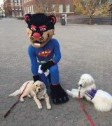 UC's Bearcat mascot with Fergie and Dalek