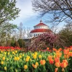 More than 10,000 varieties of tulips bloom at the zoo in April.