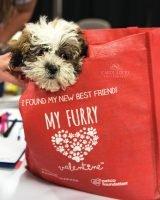 Furry Valentine pet adoption